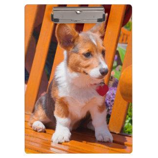 Pembroke Welsh Corgi puppy sitting in park bench Clipboard