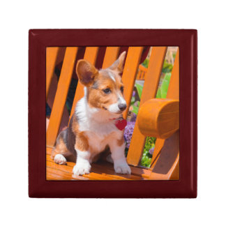 Pembroke Welsh Corgi puppy sitting in park bench Gift Box