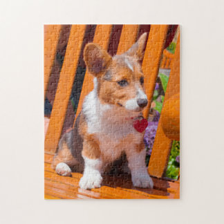 Pembroke Welsh Corgi puppy sitting in park bench Jigsaw Puzzle