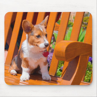 Pembroke Welsh Corgi puppy sitting in park bench Mouse Pad