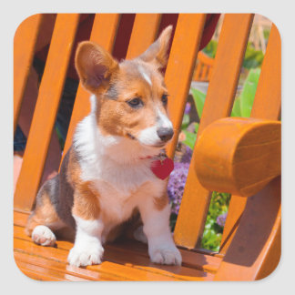 Pembroke Welsh Corgi puppy sitting in park bench Square Sticker