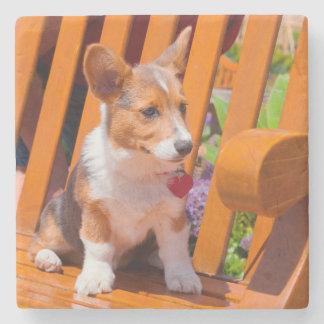 Pembroke Welsh Corgi puppy sitting in park bench Stone Coaster