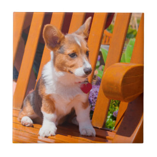 Pembroke Welsh Corgi puppy sitting in park bench Tile