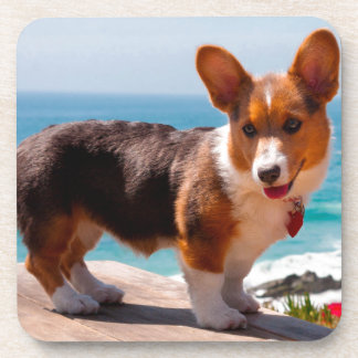 Pembroke Welsh Corgi puppy standing on table Coaster