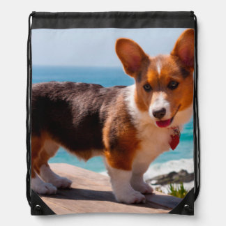 Pembroke Welsh Corgi puppy standing on table Drawstring Bag