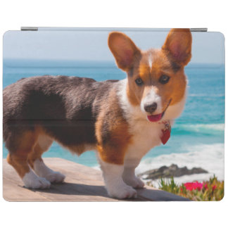 Pembroke Welsh Corgi puppy standing on table iPad Cover