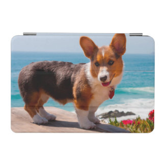 Pembroke Welsh Corgi puppy standing on table iPad Mini Cover