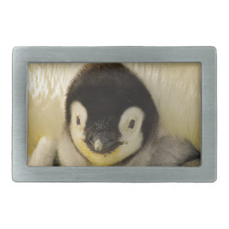Penguin baby rectangular belt buckles