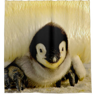 Penguin Baby Shower Curtain