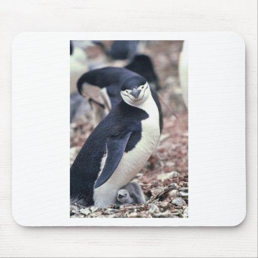 Penguin Bird Cute Animal Black White Water Mousepads