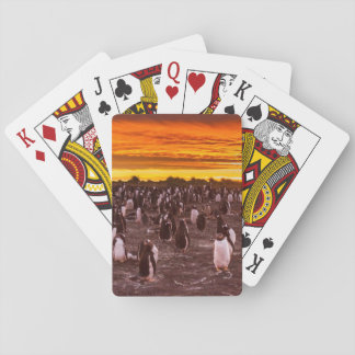 Penguin colony at sunset, Falkland Playing Cards