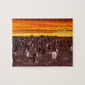 Penguin colony at sunset, Falkland Puzzle