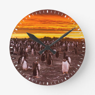 Penguin colony at sunset, Falkland Round Clock