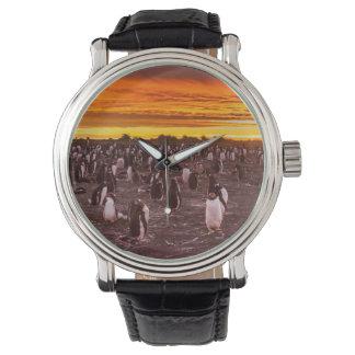 Penguin colony at sunset, Falkland Wristwatch