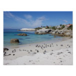 Penguin Colony on Boulders Beach, South Africa Poster