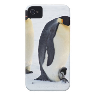 Penguin frozen ice snow bird weather cute animals iPhone 4 Case-Mate cases