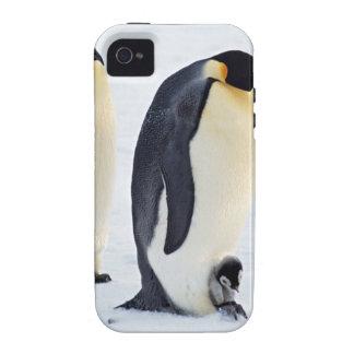 Penguin frozen ice snow bird weather cute animals vibe iPhone 4 cover