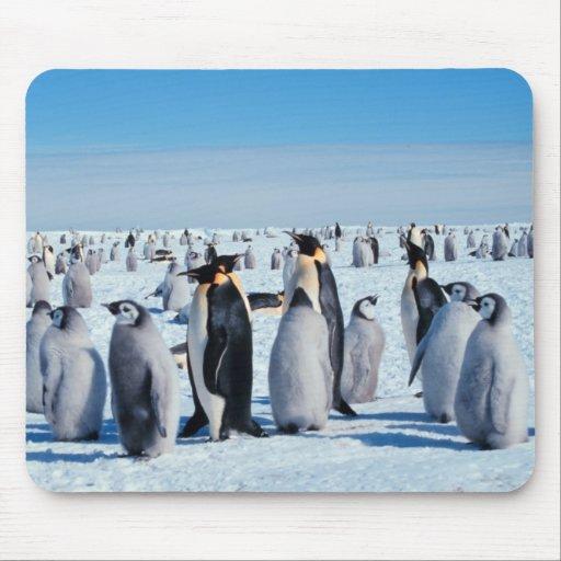 Penguin Gathering Mousepads