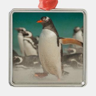 Penguin group on beach, Falklands Christmas Ornament