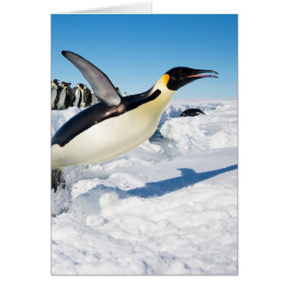 Penguin in Antarctica Jumping Out of the Water Greeting Card