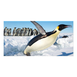 Penguin in Antarctica Jumping Out of the Water Custom Photo Card