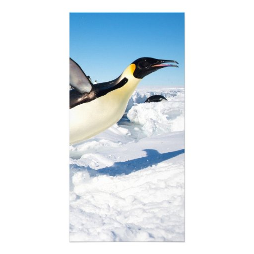 Penguin in Antarctica Jumping Out of the Water Photo Greeting Card