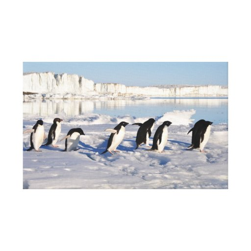 Penguin March Stretched Canvas Prints
