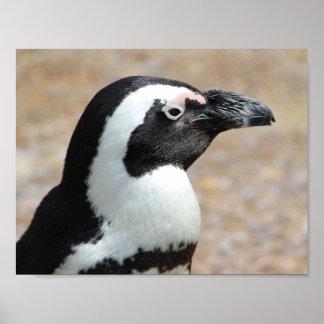 Penguin Profile Poster