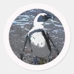 Penguin Round Stickers
