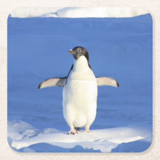 Penguin Square Paper Coaster