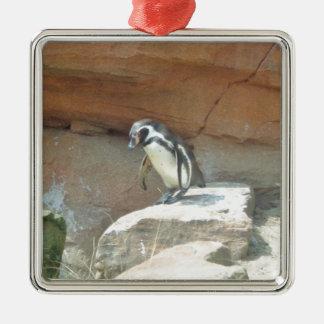 Penguin, Wildlife, Animal, Wild Bird, Zoo, Summer Silver-Colored Square Decoration
