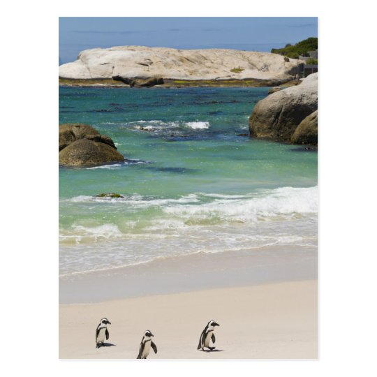 Penguins at Boulders Beach, Simons Town, South 2
