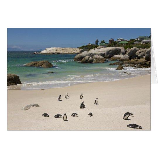 Penguins at Boulders Beach, Simons Town, South Card