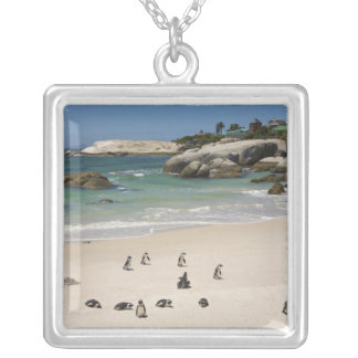 Penguins at Boulders Beach, Simons Town, South Silver Plated Necklace