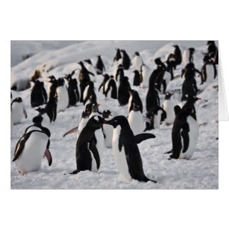 Penguins at Play Card