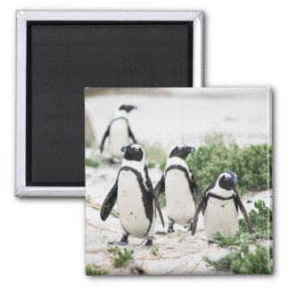 Penguins at the beach magnet