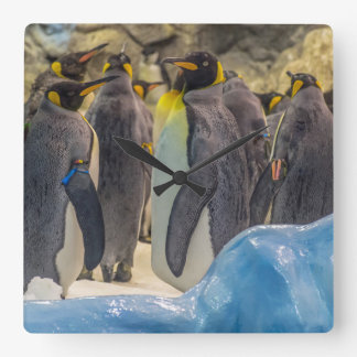 Penguins at the zoo square wall clock