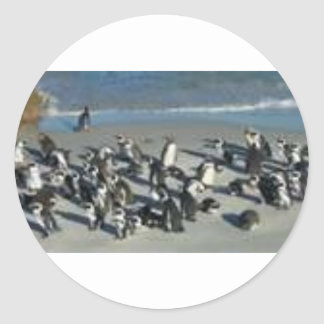 Penguins in a meeting round stickers