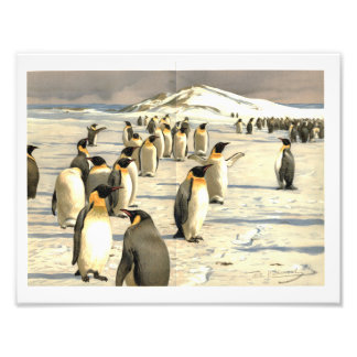 Penguins in Antarctica illustration Photo Print