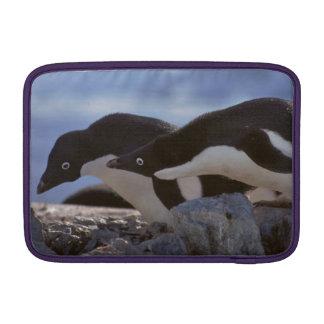 Penguins in Antarctica laptop sleeve