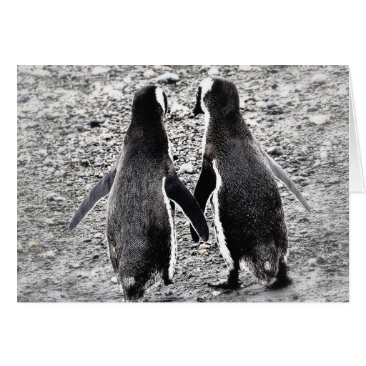 Penguins in Love Cards