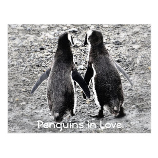 Penguins in Love Postcard