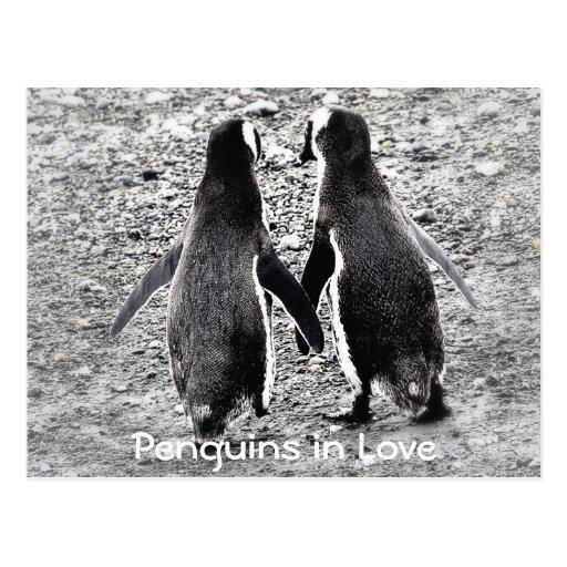 Penguins in Love Postcard