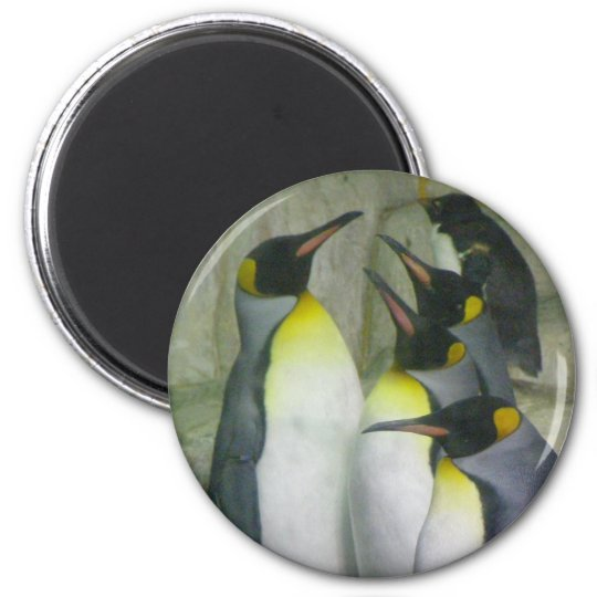Penguins, magnet