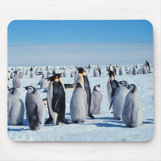 penguins mouse mat