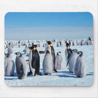 penguins mouse pad