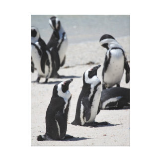 Penguins of South Africa Canvas Prints