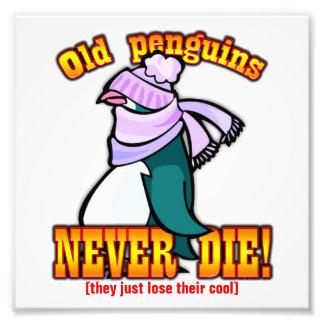 Penguins Art Photo