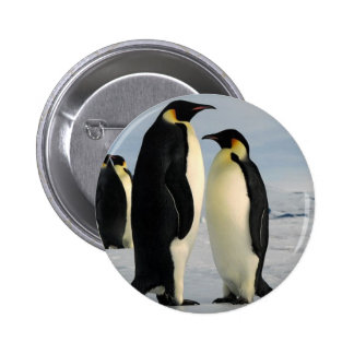 penguins-poop-from-outer-space 6 cm round badge