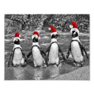 Penguins with Santa Claus caps Photo Art